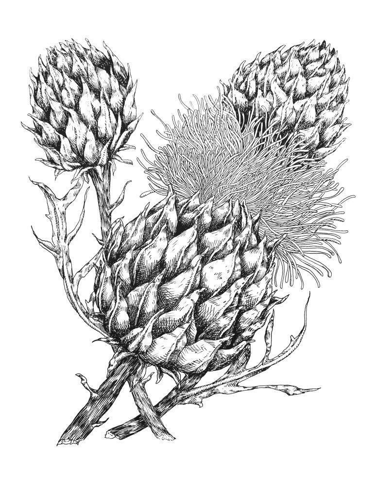 Blatt_1, Tuschezeichnung, 30x40cm
